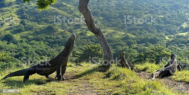 Beberapa Hal Mengenai Wisata Pulau Komodo yang Perlu Kamu Tahu